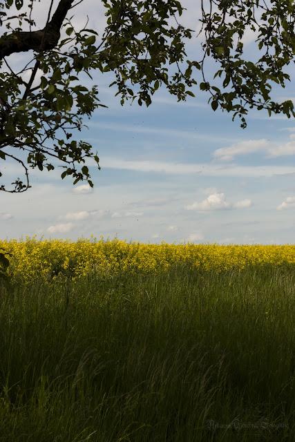 Landschaftsimpression Frühjahr