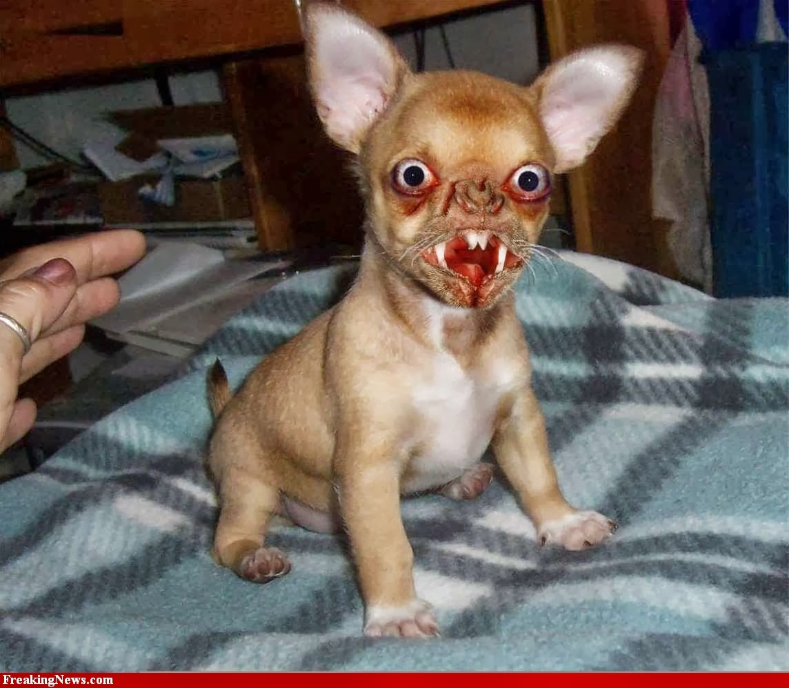 Funny Ugly Dogs | Interesting Facts & Funny Pictures | Funny And Cute ...