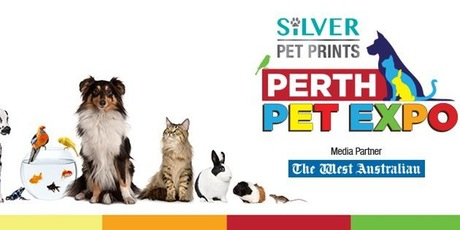 pets perth home video