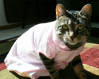 girl alike cat