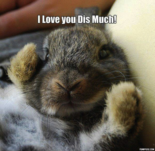 I love you dis much!  Funny Pictures