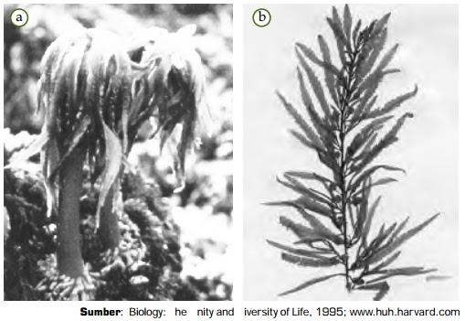 Ciri-Ciri Protista Mirip Tumbuhan (Alga / Ganggang) | Gambar, Contoh, Klasifikasi Protista Mirip Tumbuhan