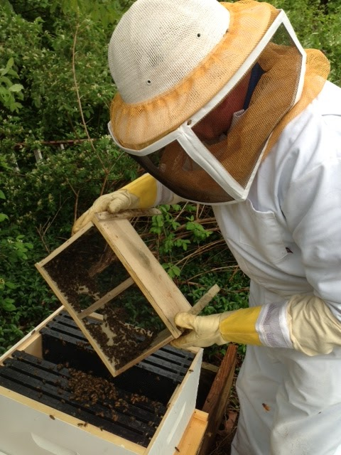Installation Of New Bee Packages And Two New Queens Into Two New Bee Hives  In Our Birds And Bees Backyard East Gloucester, MA