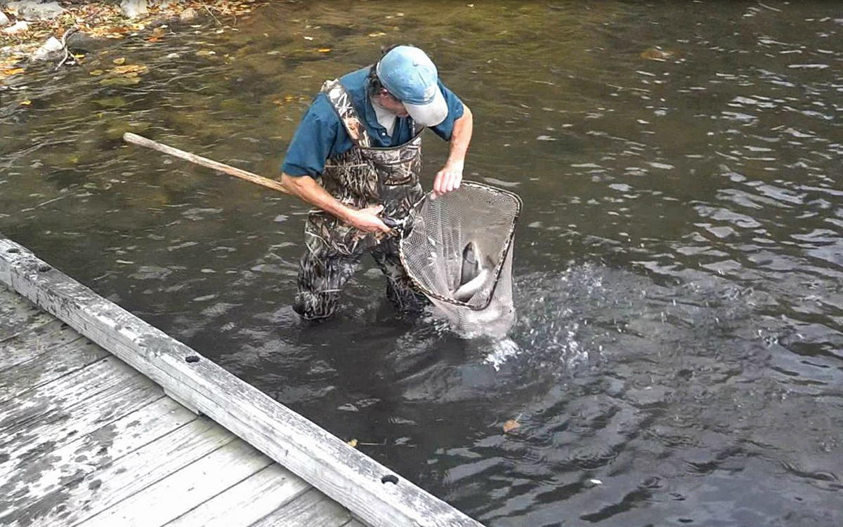 Lake metroparks fishing report rainbow trout fall for Cleveland metroparks fishing report
