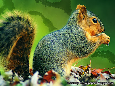 Squirrels Latest Desktop Wallpapers