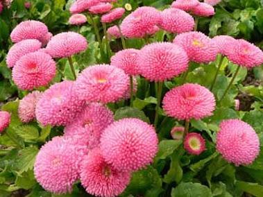bunga di jepang