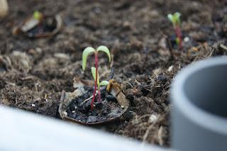 Tutorial: DIY selbstbewässernde Pflanzbox für's urban gardening