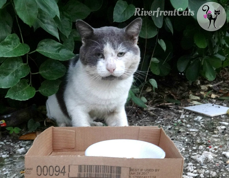 Rc Cat Food Spay And Neuter