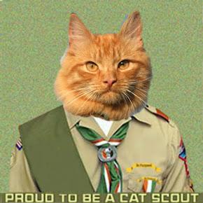 Cat Scout Hazuzu