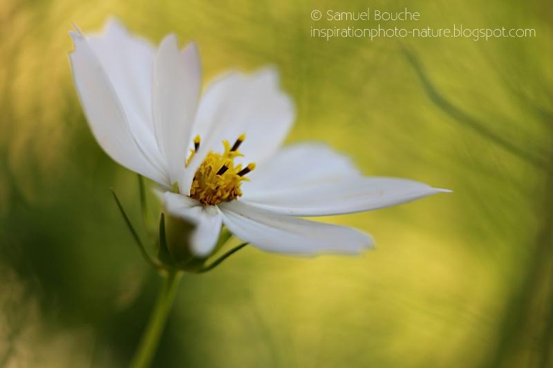 macrophotographie fleur artistique bokeh