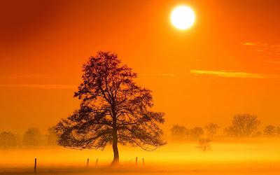 Gambar Pohon dengan Kabut Cantik
