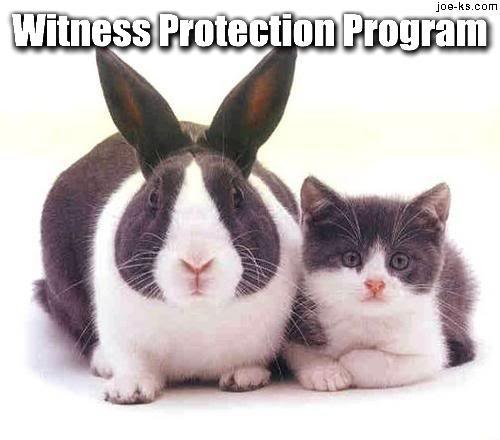 Witness Protection 12