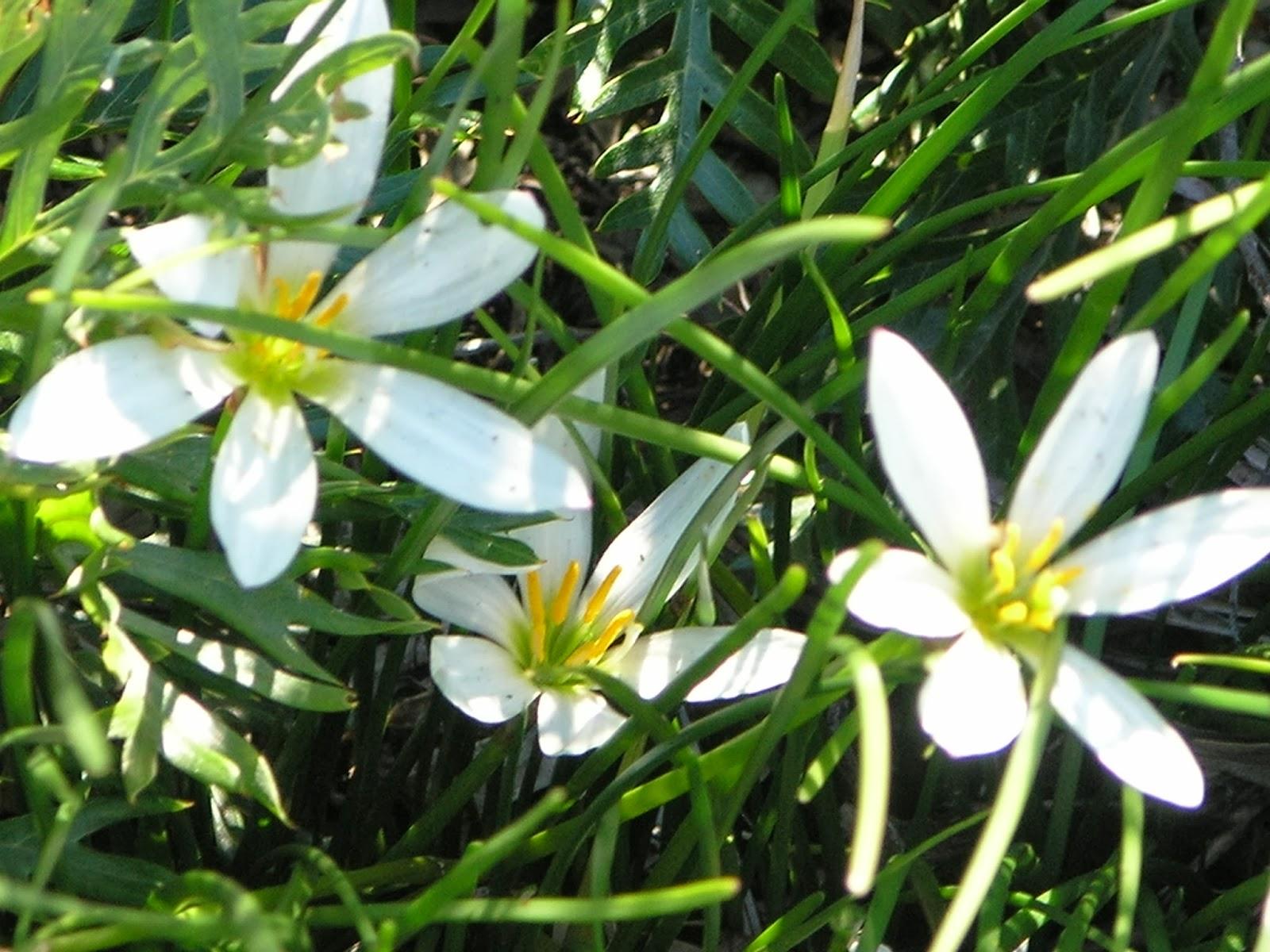 Photos of spring