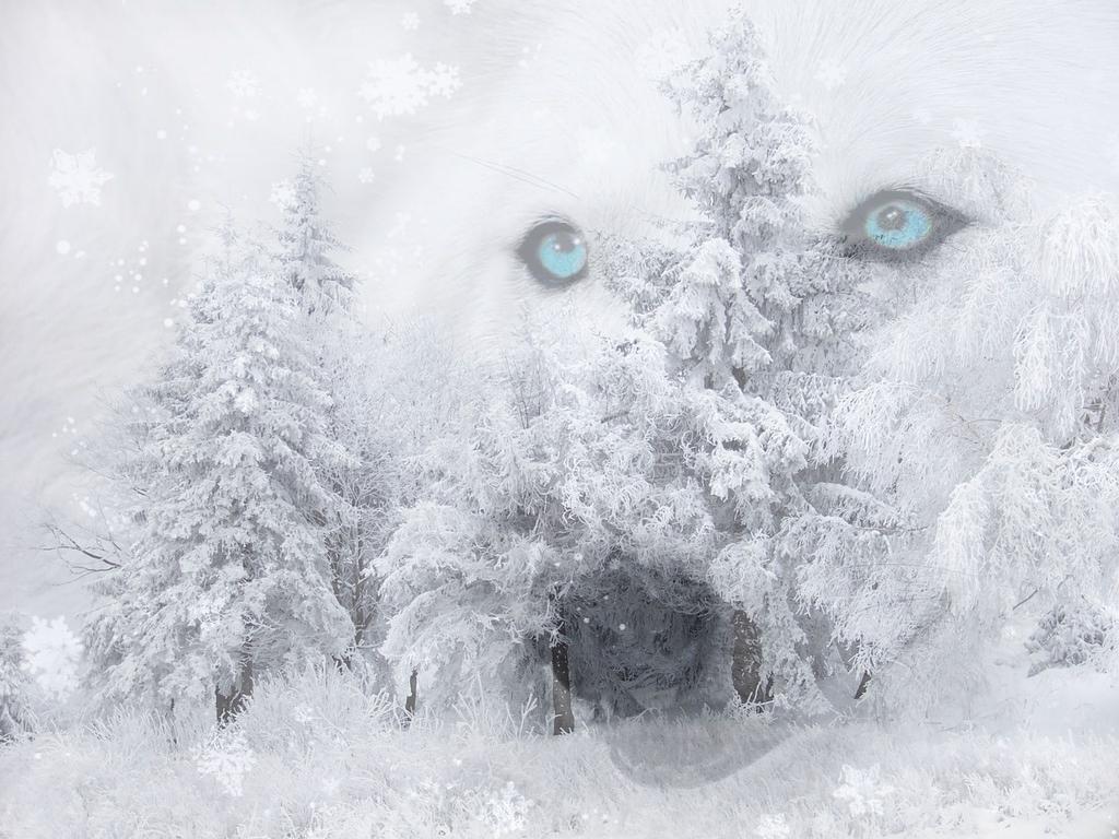 http://1.bp.blogspot.com/-IZnGALf2ByQ/TwyPFcpdV1I/AAAAAAAAEo4/RJ8RCuizuUo/s1600/Winter_Wolf_Wallpaper_fulk.jpg