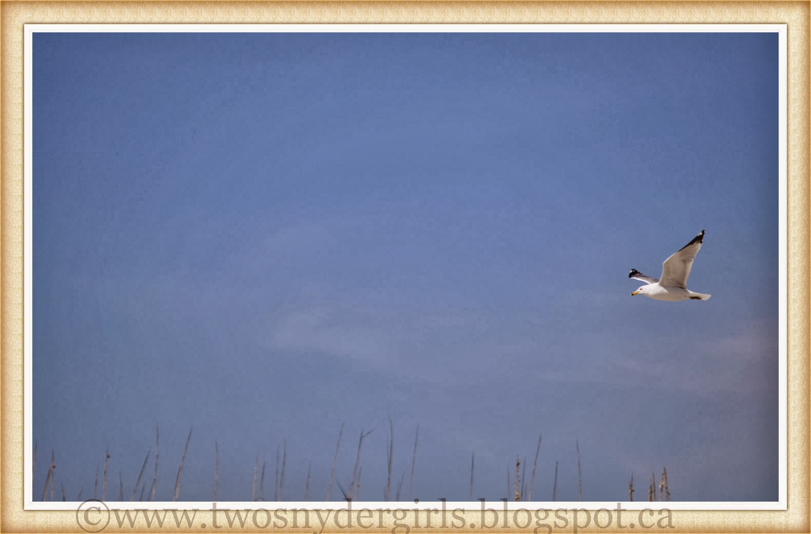 Single Seagull in flight