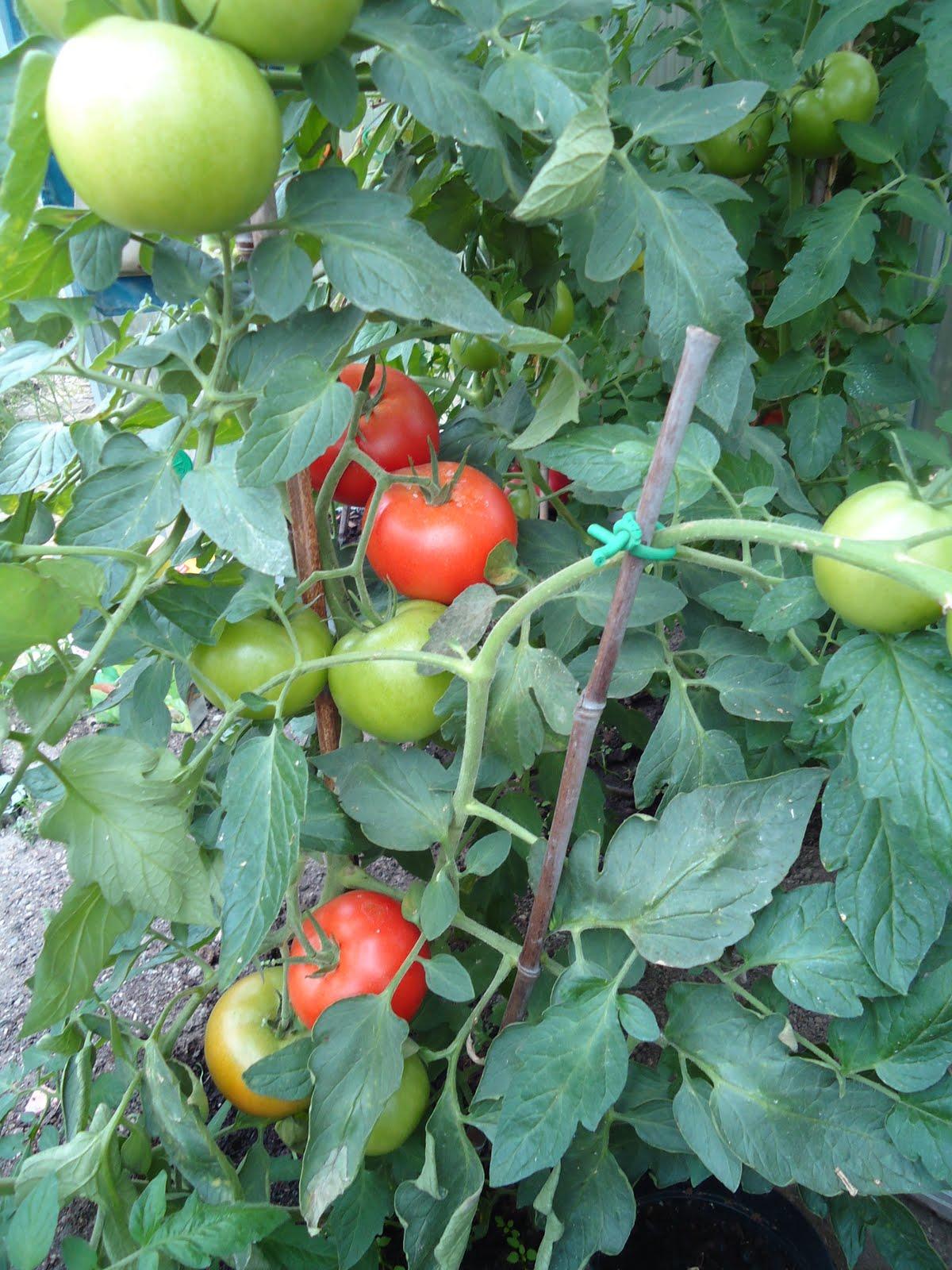 martinas kochk che fruchtiges tomaten chili. Black Bedroom Furniture Sets. Home Design Ideas