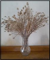 Πώς μπορούν να αποξηρανθούν φυτά ή λουλούδια;