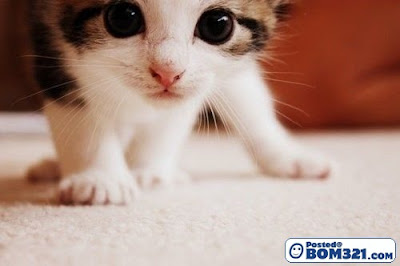 cutest cat kucing comel