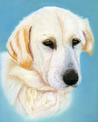 Labrador, Great Pyrenees, Crossbreed, Dog, Pastel Painting, Pet Portrait, Fine Art, Traditional Painting