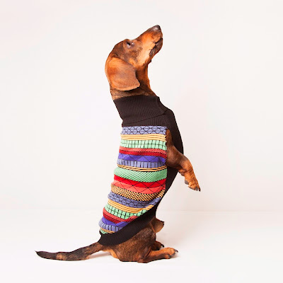Jersey para perro modelo Dogster