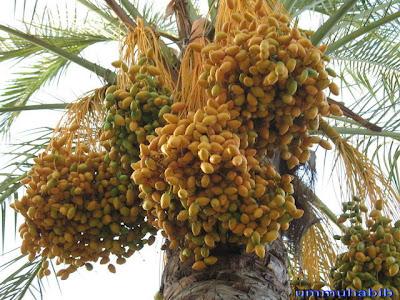 http://1.bp.blogspot.com/-IaSDiSSe_ts/TxvLYnbR3BI/AAAAAAAABOM/a4nK2qofU5Y/s1600/yg-kuning.jpg