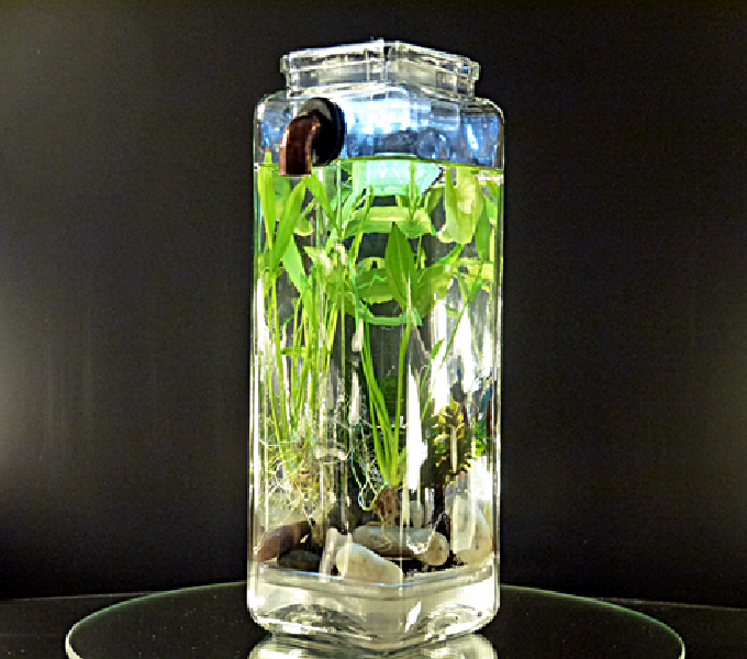 Aquascape Cupang Tanpa Filter