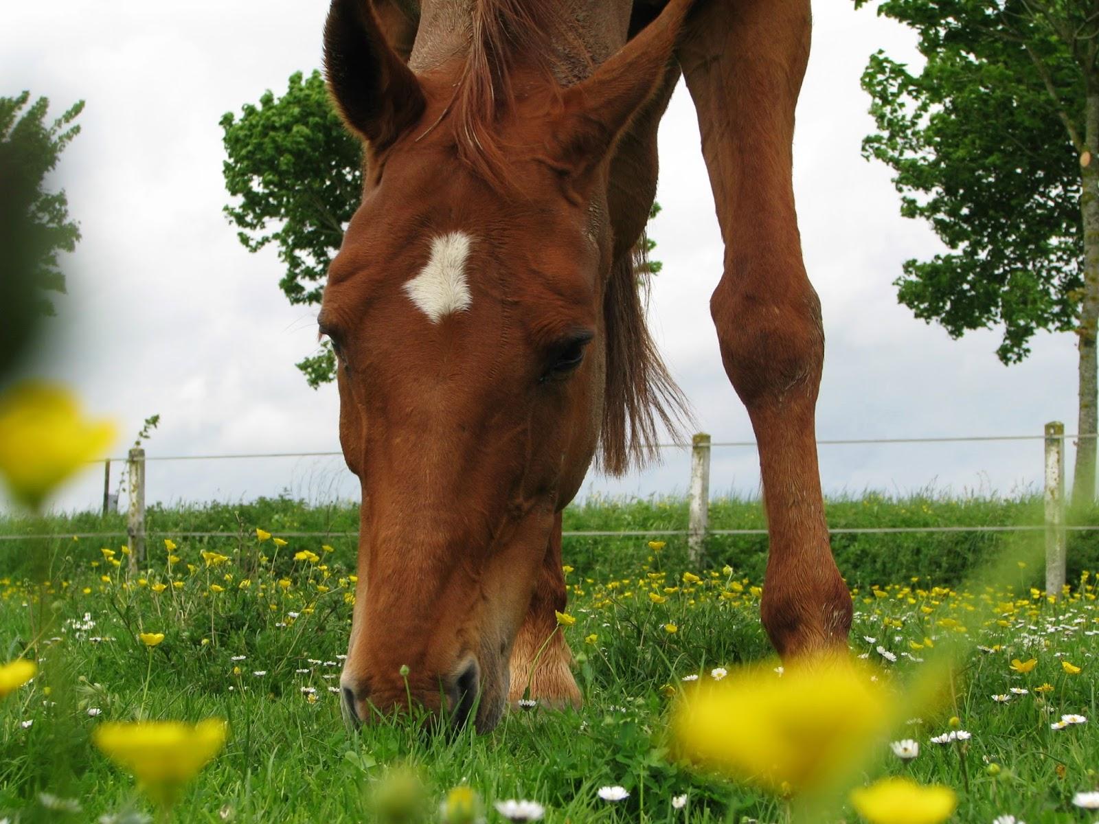 La crini re blonde blog de r flexions questres les - Tchoupi et le cheval ...