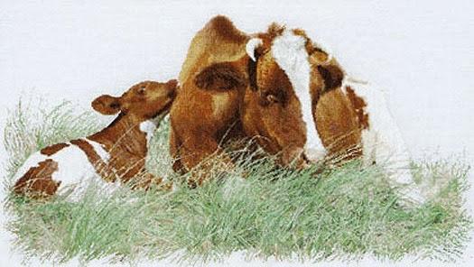 Thea Gouverneur, Корова и теленок