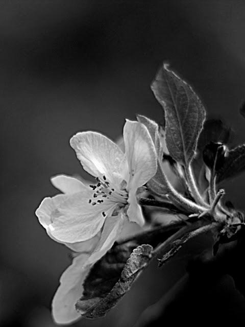 ©Flor de Manzano VicenSala