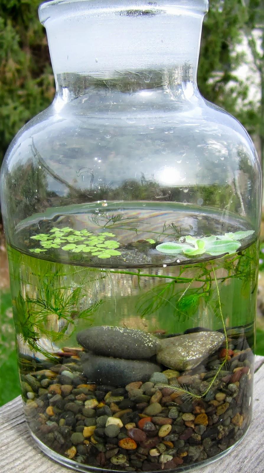 Jar Water Garden