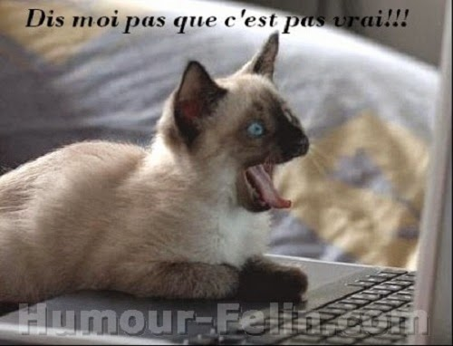 Favori Photo chat humour - Photo de chat IX85
