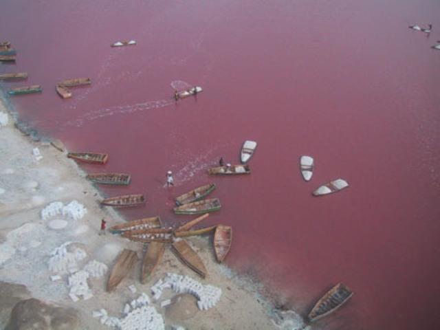 pelik, air tasik, warna pink, negara, senegal, pelik, nama, sebab, bakteria, kombinasi, gabung, garam, sebab, laut mati, terapung