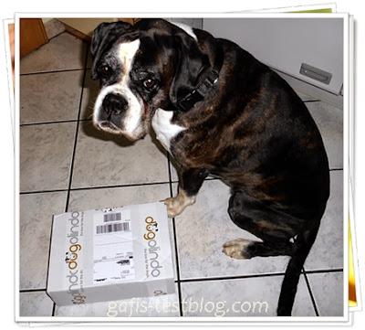 Boxer Ivy mit doglindo Hunde-Box