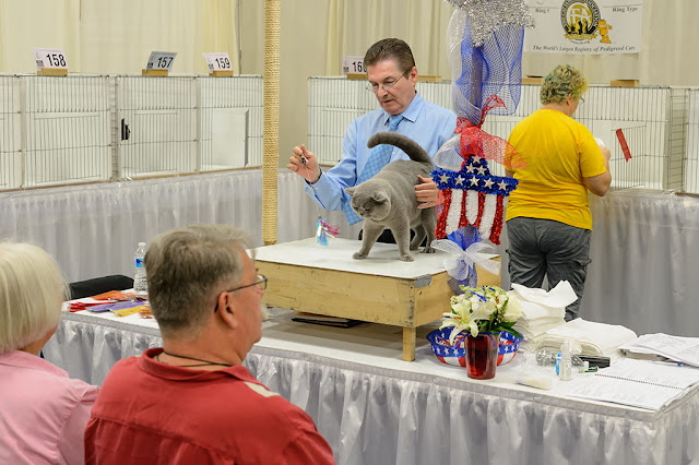 Judging at the National Capital Cat Show