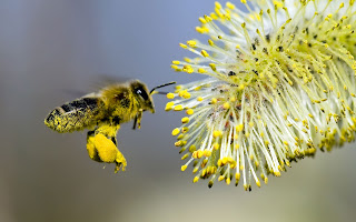 EU Announces Potential Ban on Neonicotinoid Pesticides Linked to Bee Deaths, Environmental Collapse