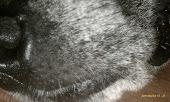 Snouts