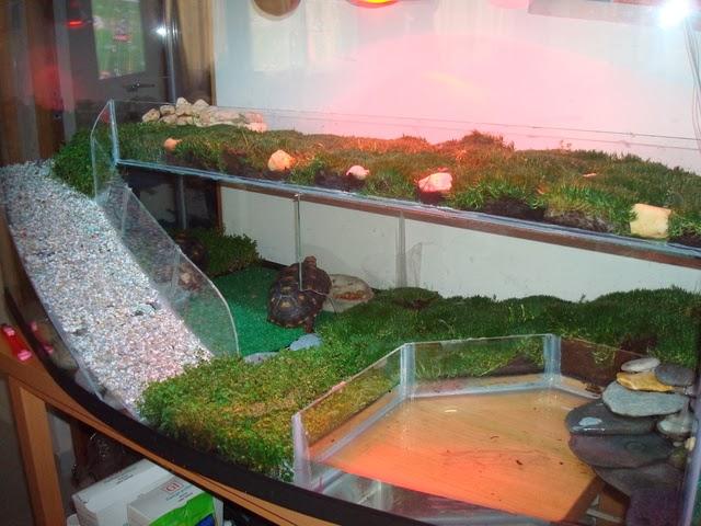 muchos tips para crear acuarios y espacios muy creativos para tu tortuga a continuación les dejare unas imágenes tanto de peceras como de jardines.