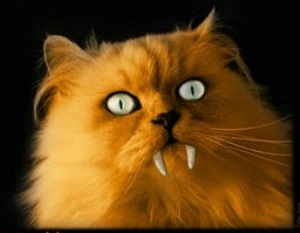 Votación mejor disfraz Happy-halloween-cat-wish-card