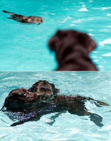 كلب وقطة - تعاون - انقاذ - حيوانات ظريفة