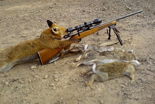 funny weapons fail picture sniper fox hunting rabbits
