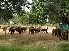 Verschillende wildparken staan op het programma en projecten van de Marjo Hoedemaker Elephant Foundation gaan bezocht worden.