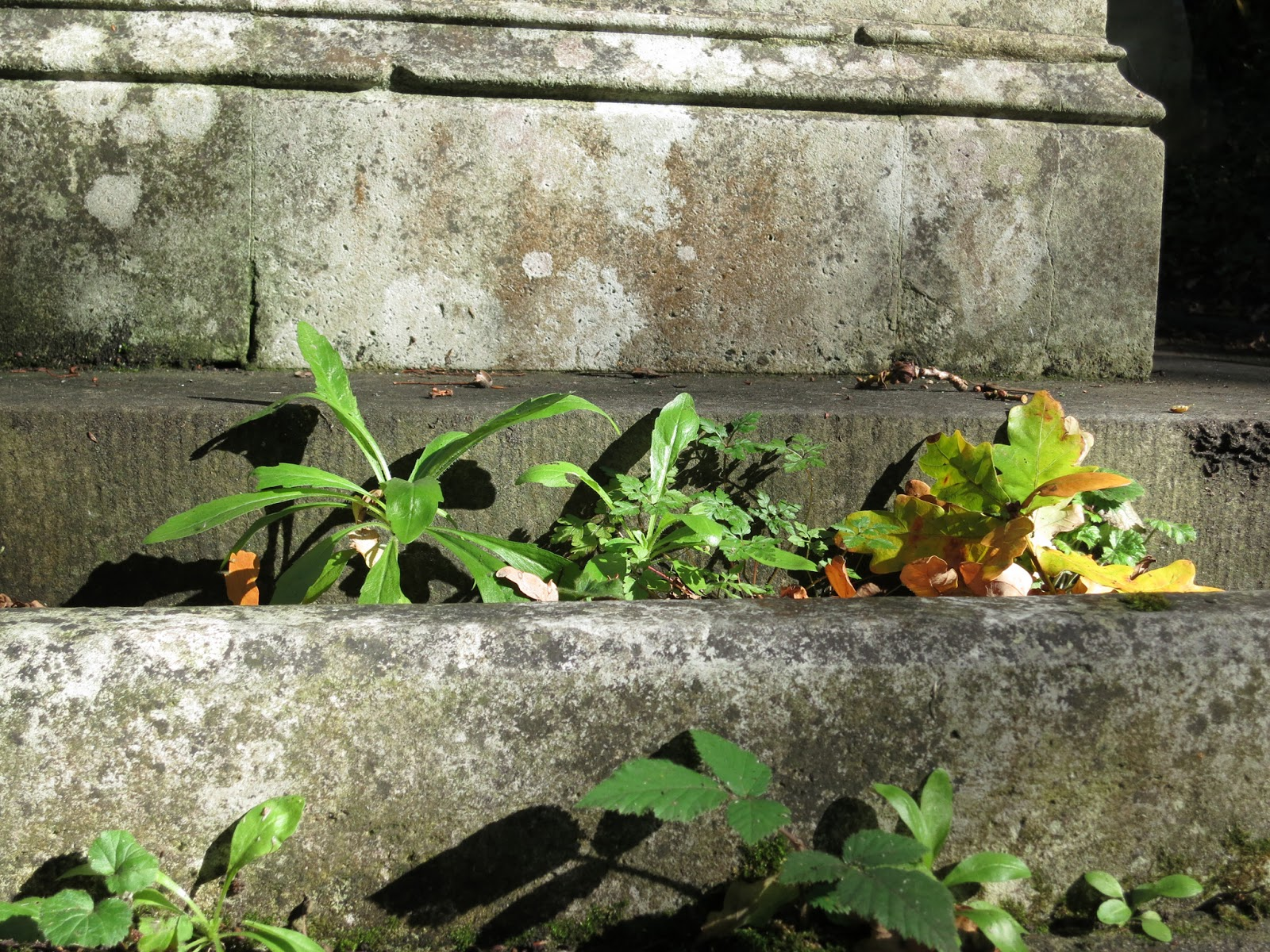 Plants and fallen oak twig  growing from plinth on tomb.