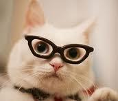 Un gatito listo video divertido