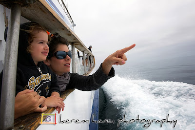 Channel Islands Wildlife Cruise