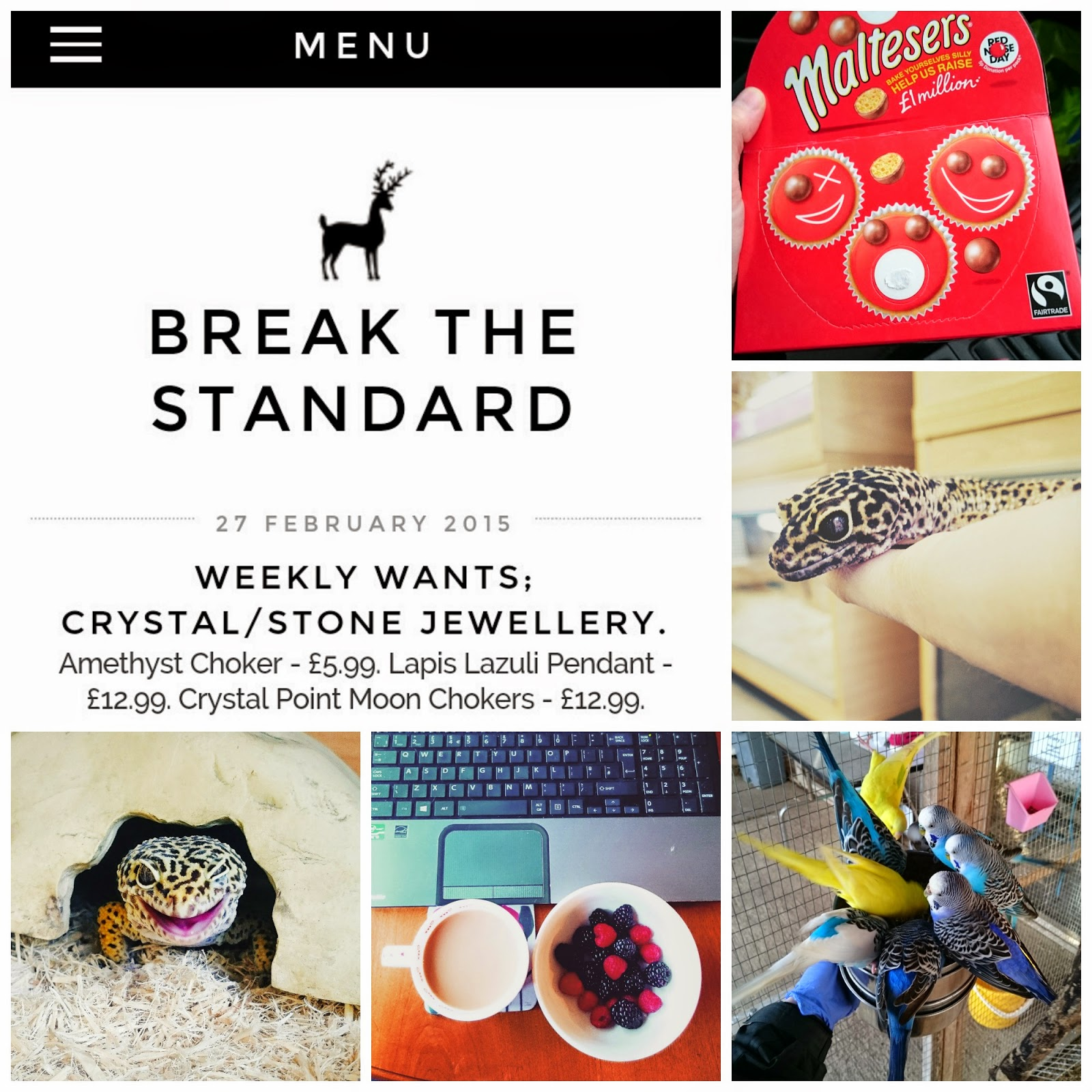 New blog design, malteasers, geckos, budgies and healthiness.