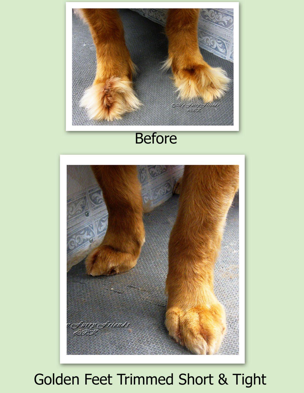 Foot grooming