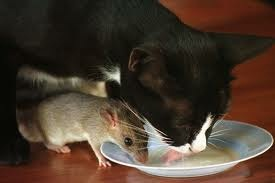 Kucing Aneh Dan Tikut Bersahabat