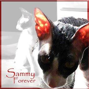 SAMMY 6/13/2001 - 12/21/2015