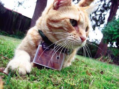 貓咪攝影師 貓咪攝影師項圈上掛一具相機