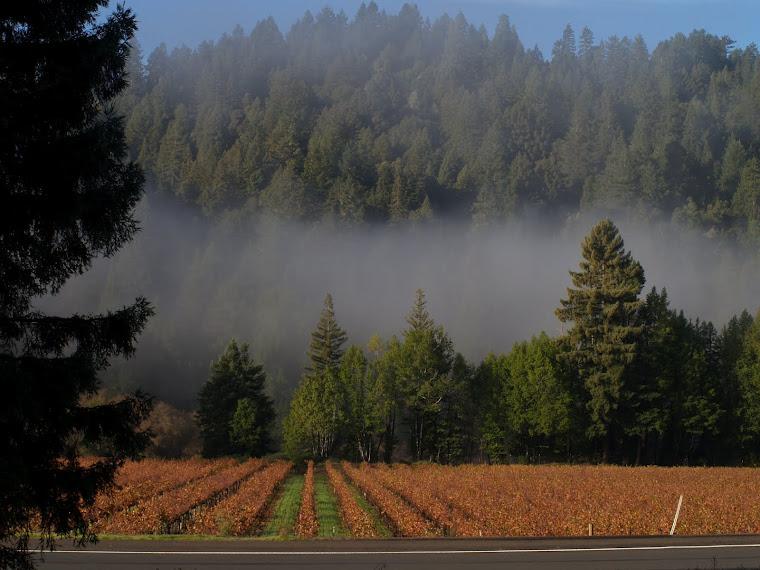 Corbel vinyards